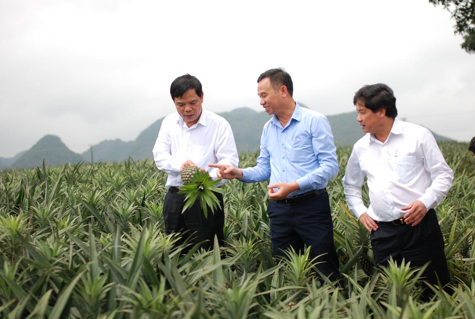 Bộ trưởng Nguyễn Xuân Cường khảo sát mô hình sản xuất nông nghiệp công nghệ cao tại tỉnh Ninh Bình